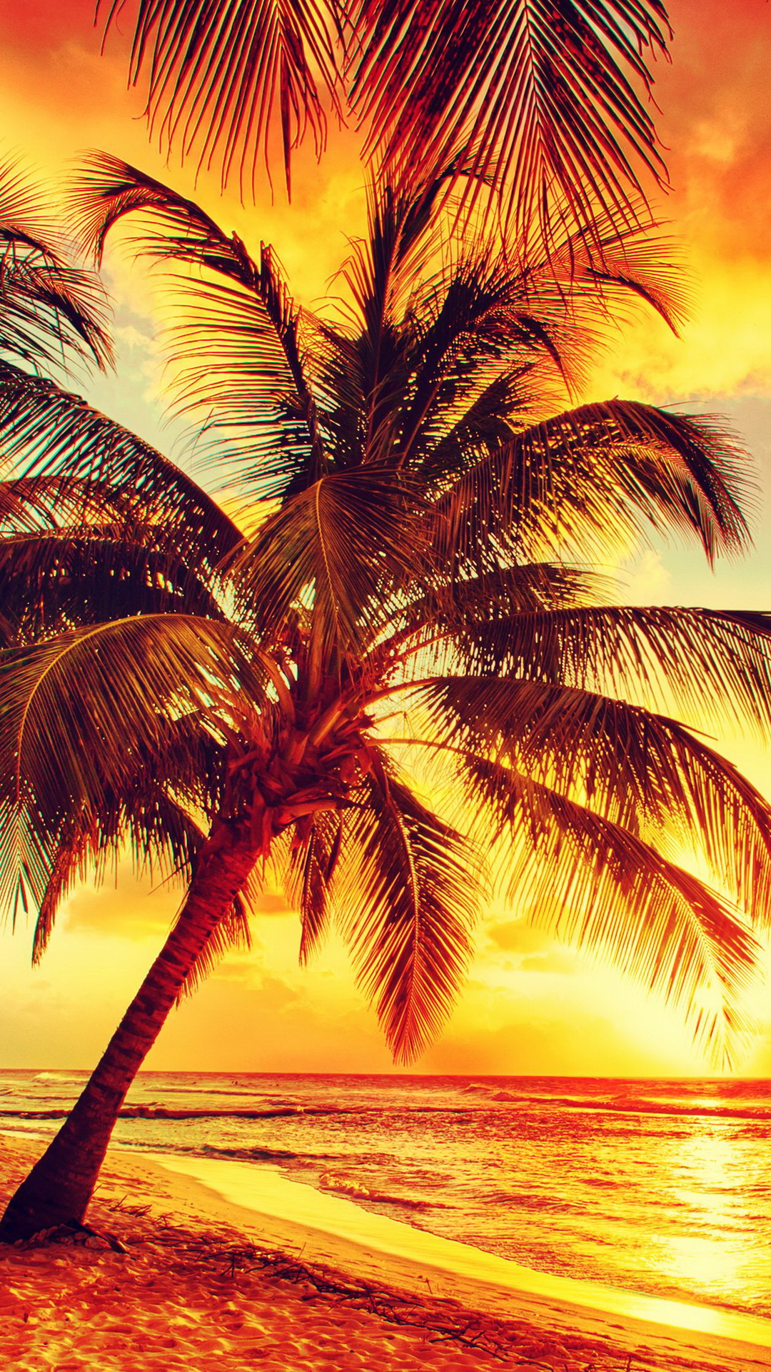 palm tree wallpapers for iphone 5